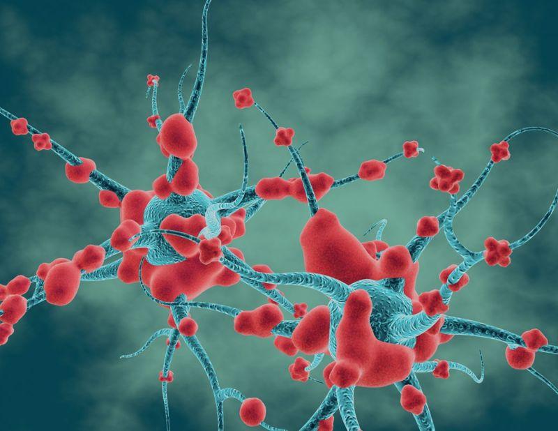 Acrylamide Neurotoxin Peripheral Neuropathy Neurotransmitter
