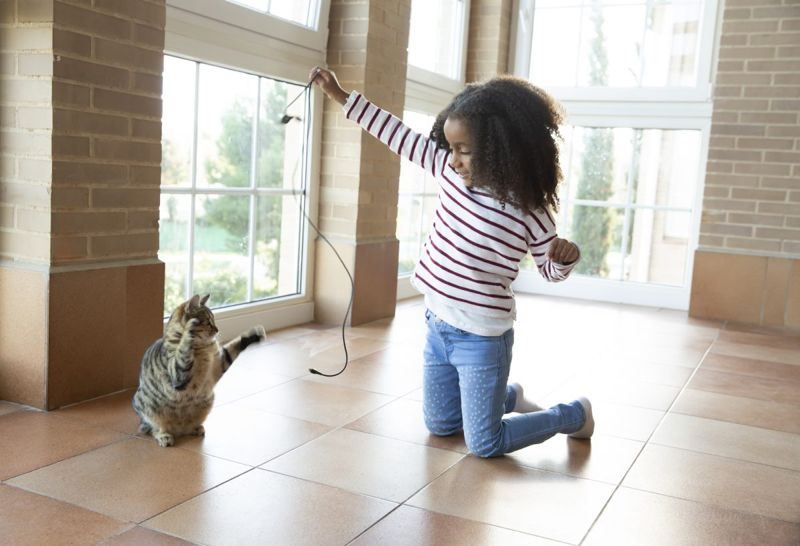 Play Pets Cat Dog
