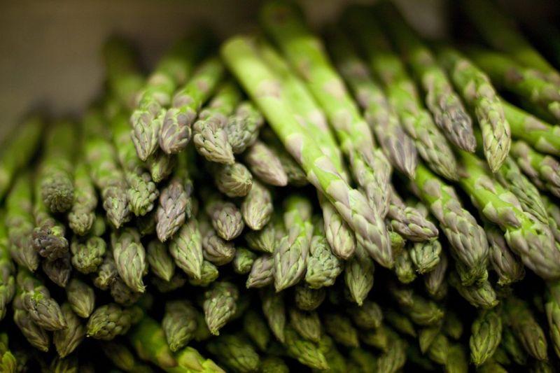 Asparagus serotonin cortisol receptors GABA