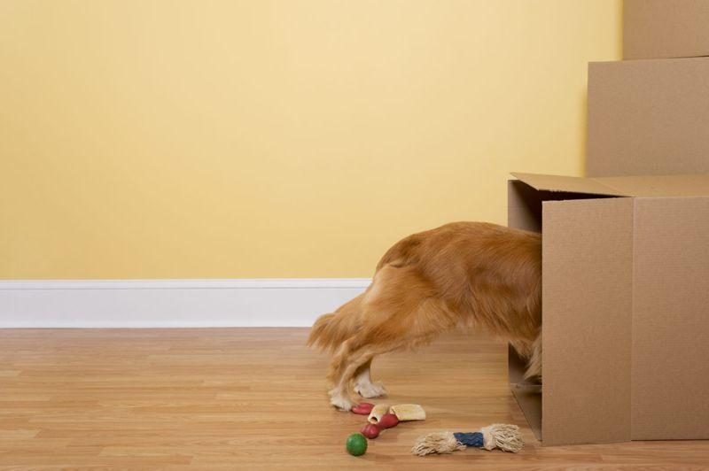 Cardboard box tunnel
