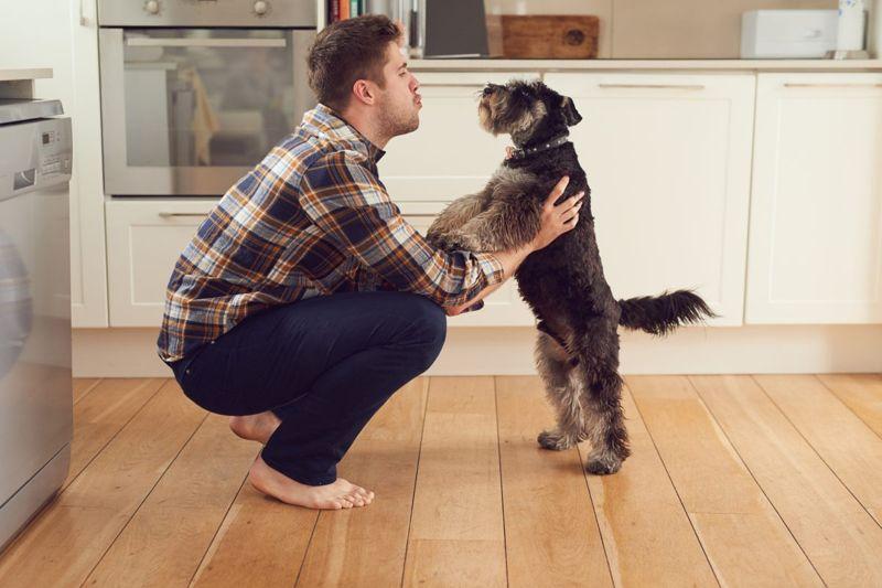 Let dog find the humans