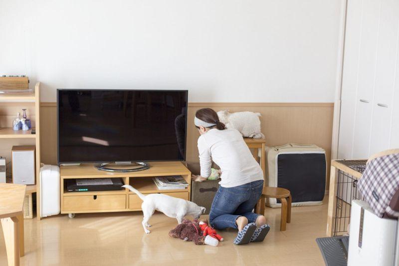 Teach dog to tidy