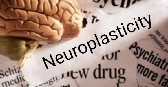 How Neuroplasticity Affects The Brain