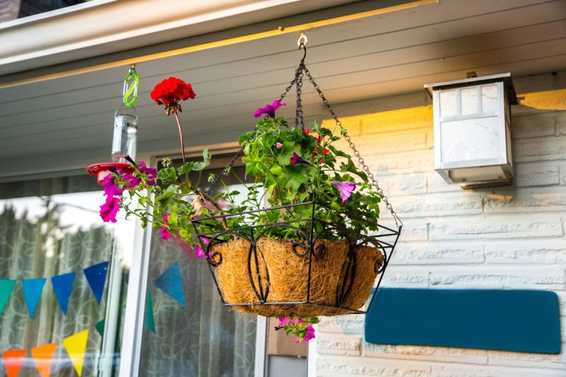Potted plants are easily maintained