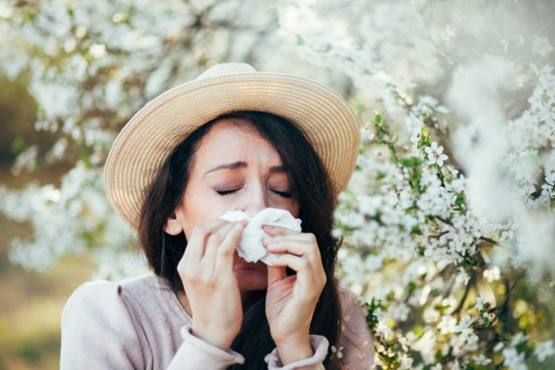 allergies sneeze immune response
