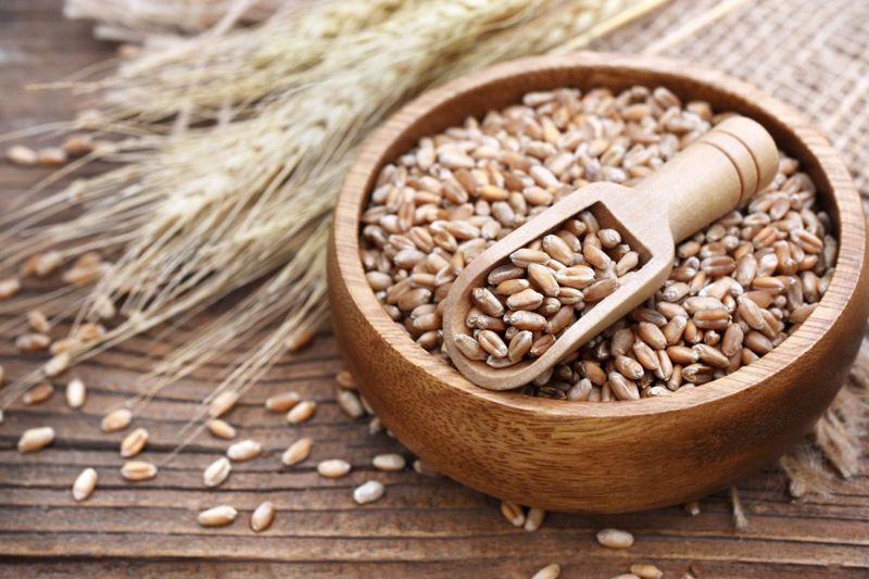 Wheat grains in bowl