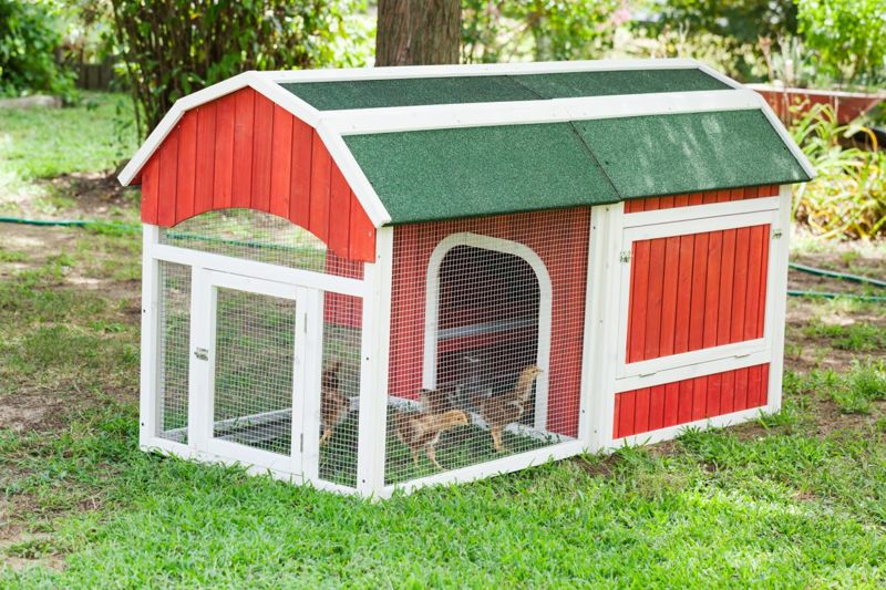 Portable mini-coops can shelter chicks