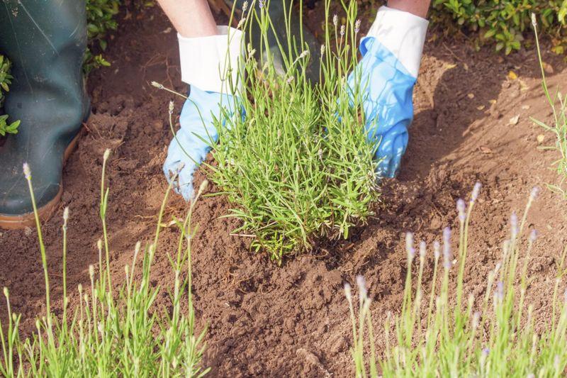 gardening dry soil