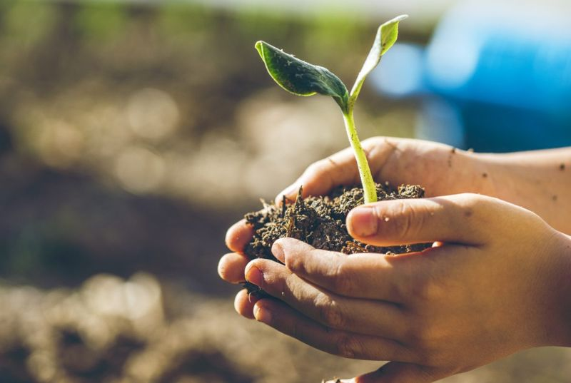 Gently move your seedlings to the garden.