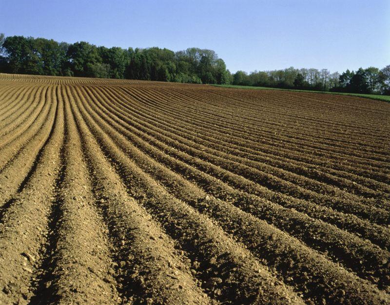stutzeri degrade pollutants soil fertility