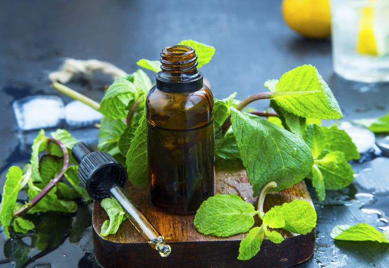 Peppermint leaves and extract