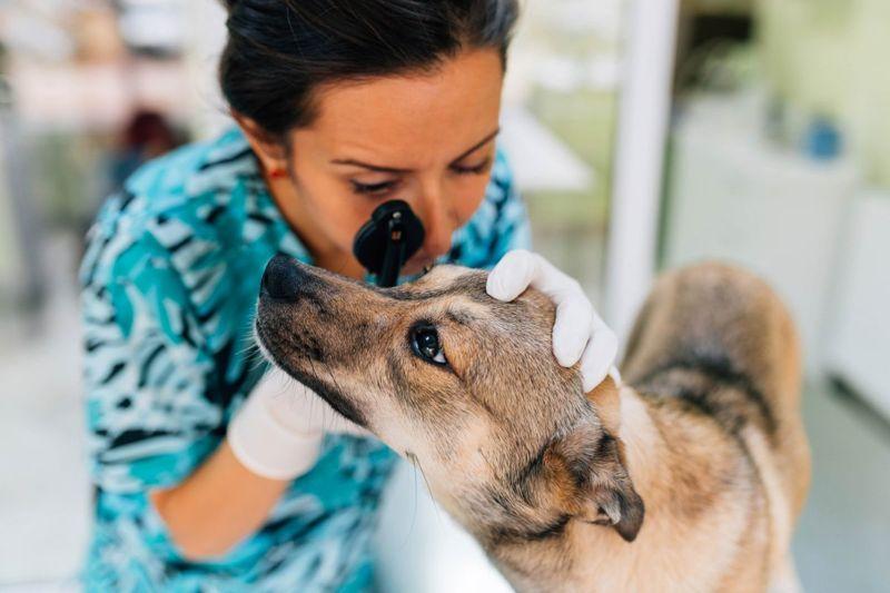 anectdotal reasons conditions veterinarian