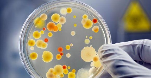 Pathogenic and Beneficial Pseudomonas Bacteria