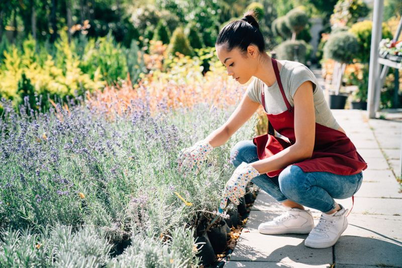 Woman taking care of plants and herbs at summer day. Small family business conceptMixed race housewife taking care of plants and herbs at summer day. Small family business conceptMixed race housewife taking care of plants and herbs at summer day. Small family business concept
