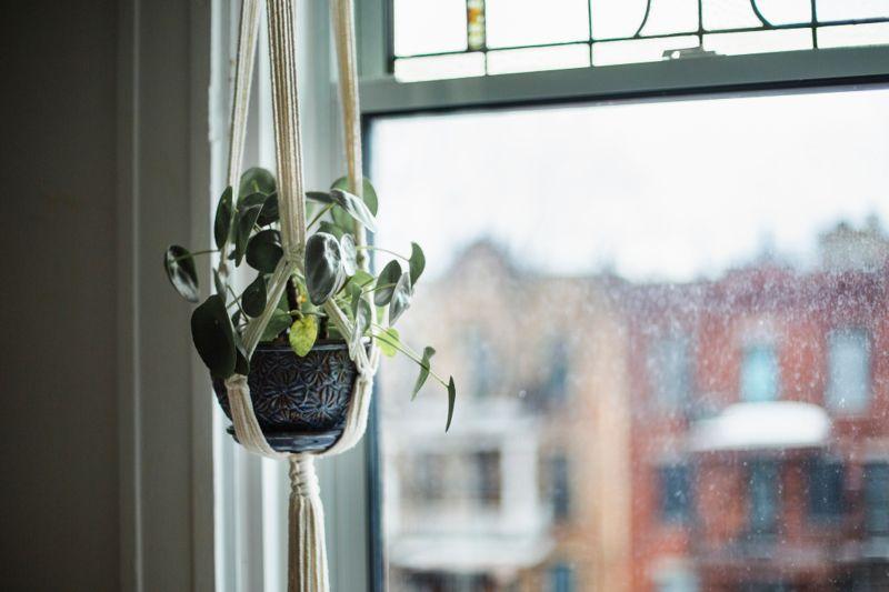 Potted plant, hanging basket, hanging, botany