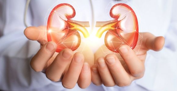Foods That Support Your Kidneys