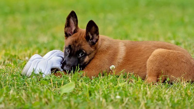 bold friendly aloof puppy