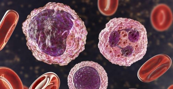 The Role of Monocytes in the Immune Response