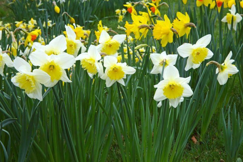 Use wildlife-repelling plants