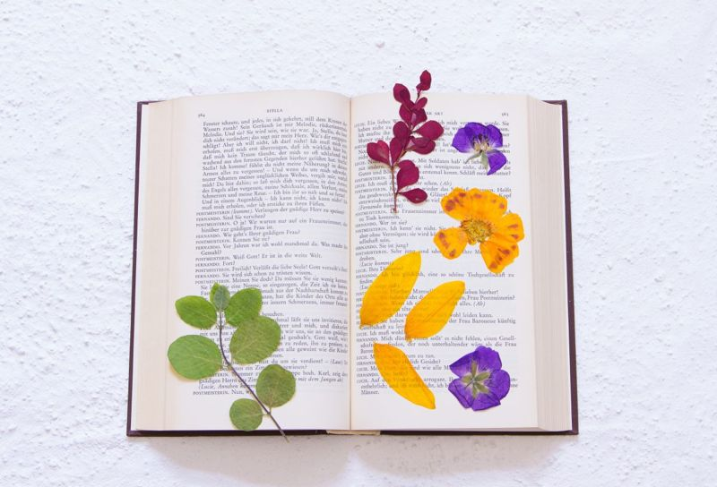 Pressing Flowers In Book Parchment