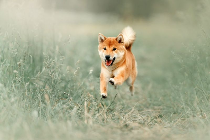 Exercise helps prevent barking, aggression