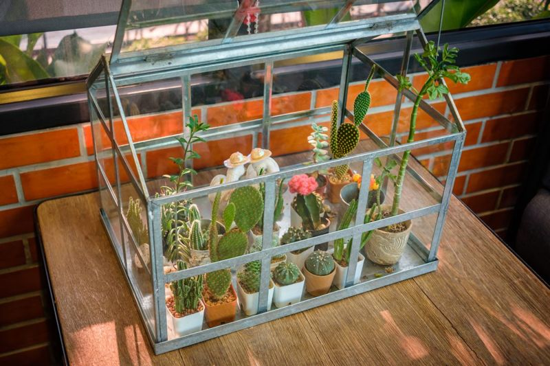 greenhouse, mini, small, plants