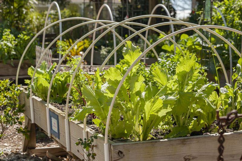 hoops, plants, greenhouse