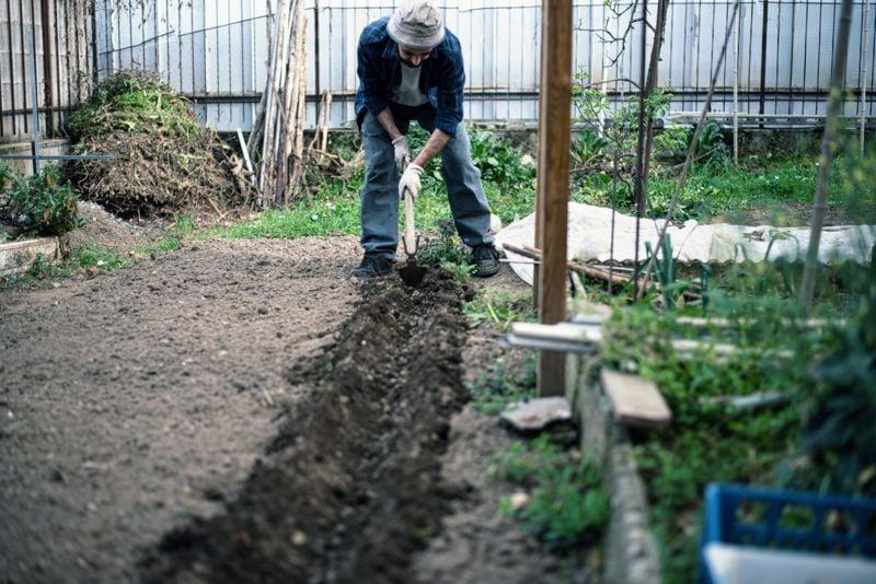 Preparing Asparagus Bed Gardening