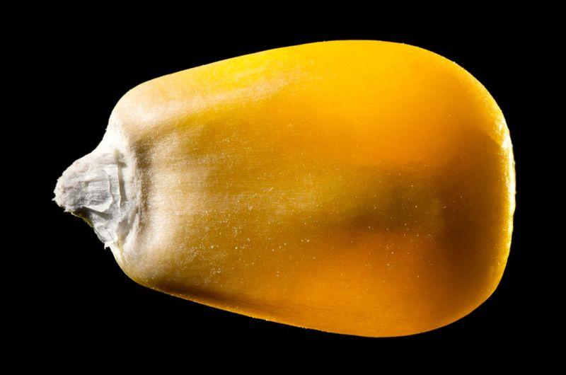 flavonoids carotenoids lutein kernel