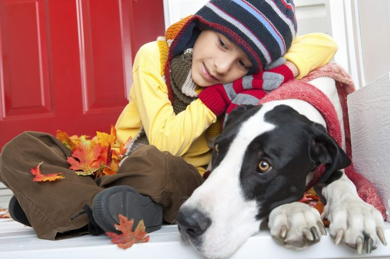 family dogs children protective dog