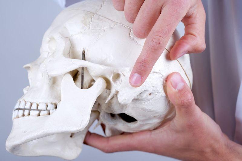 mastoid bone skull