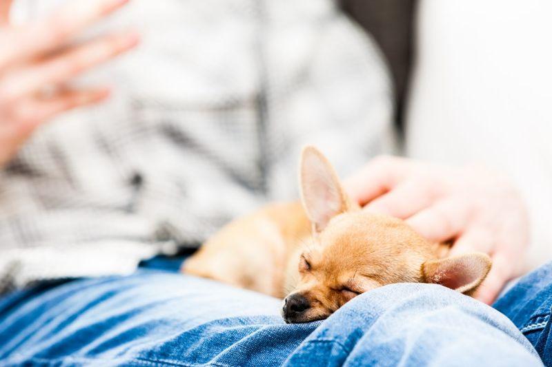 close human watchdog sleeping