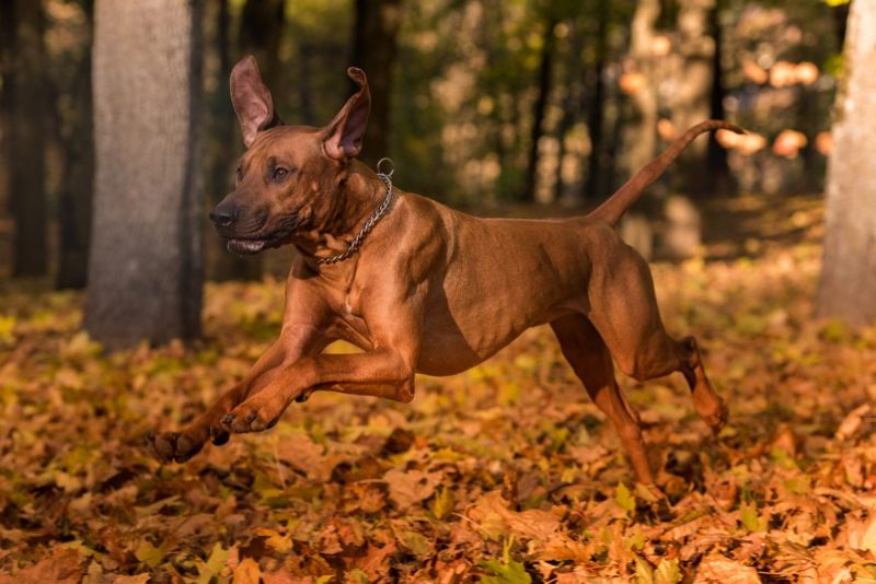 active lifestyle companion canine running