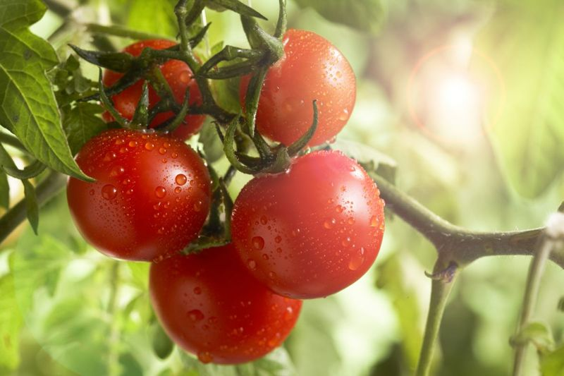 low-carb tomatoes