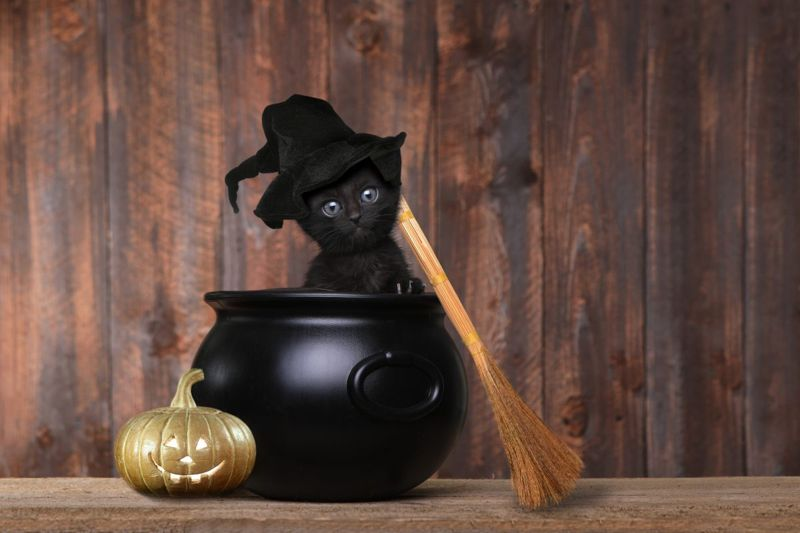 Mysterious black cat names