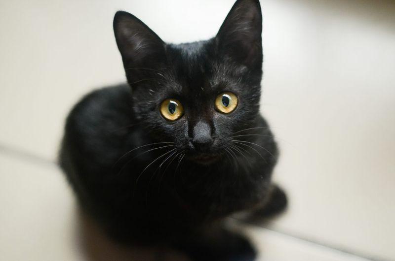 Traditional Female Black Cat Names