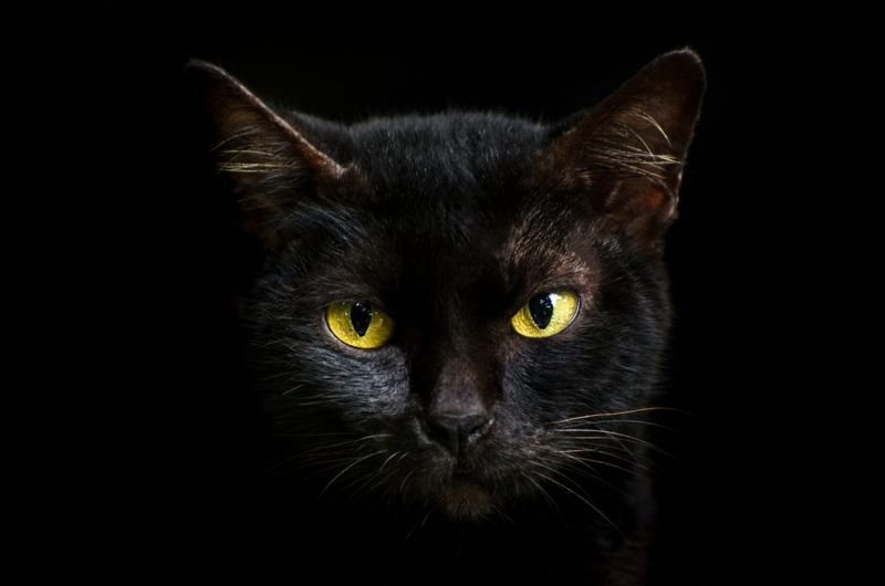 Color-inspired black cat names
