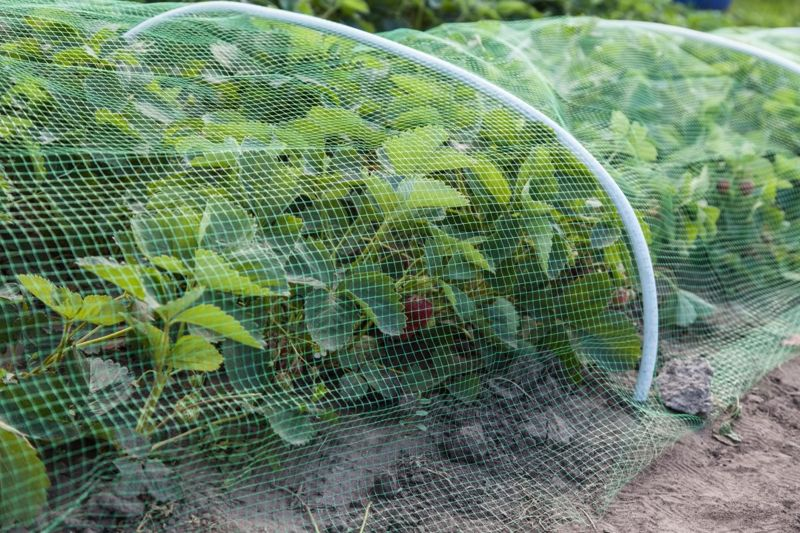 Cover or surround plants with mesh