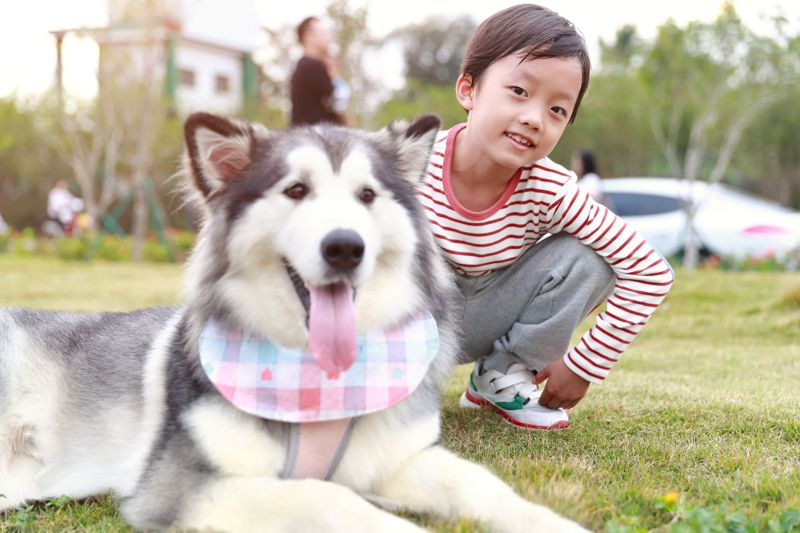 Little boy with Alaskan malamute