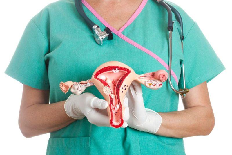 introitus vulvar anatomy