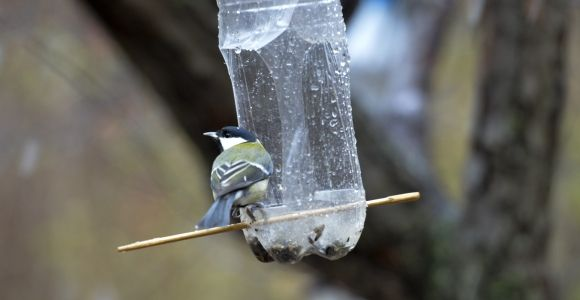 Feed Your Feathered Friends With These DIY Ideas