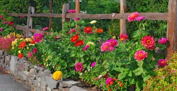 Showstopping Annual Flowers You Need In Your Garden