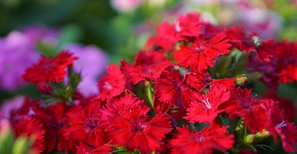 Red Flowers for Every Season