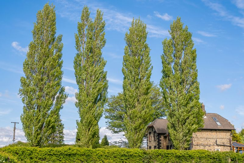 leylandii, often referred to simply as leylandii, is a fast-growing coniferous evergreen tree much used in horticulture, primarily for hedges and screens
