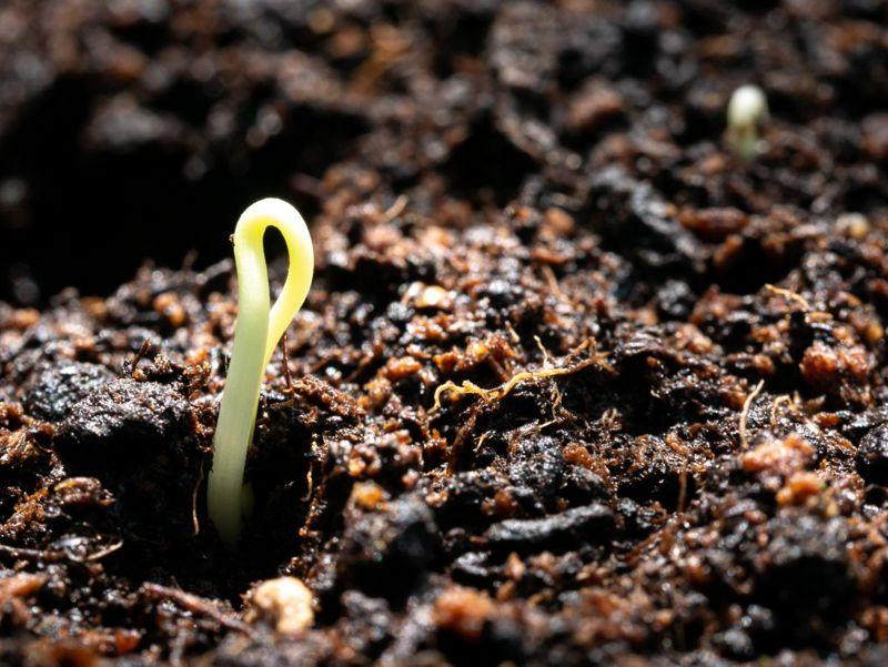 shrub tolerant wet soil
