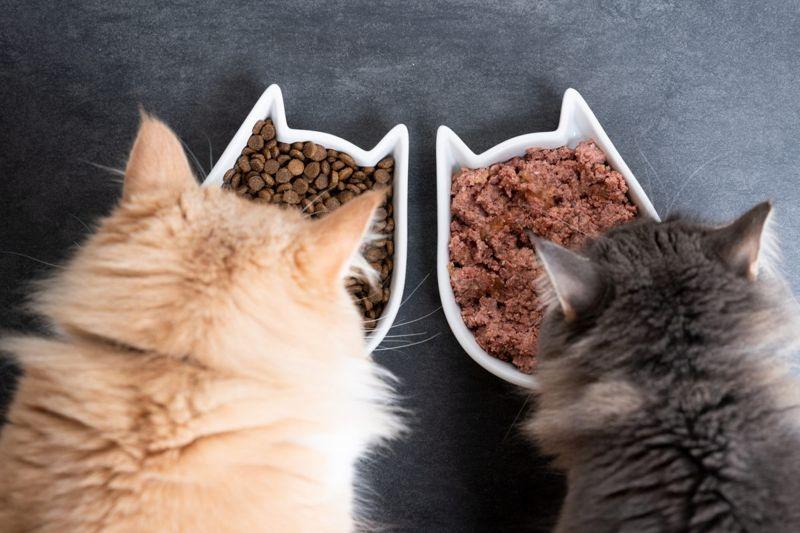 malnutrition carnivores eating