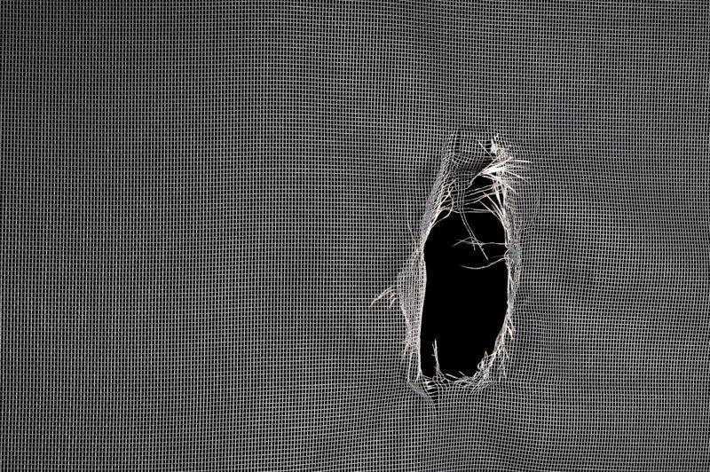 leafhoppers repair torn window screen