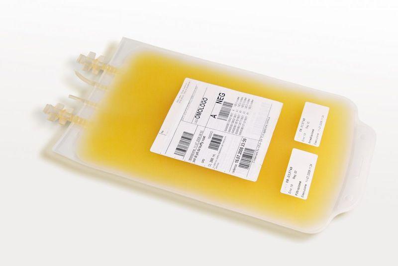 plasma blood marrow