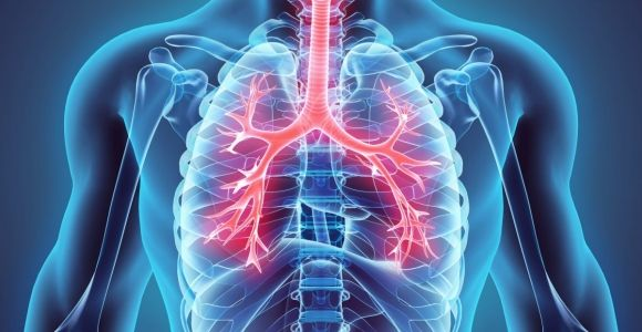 Anatomy and Physiology of the Lungs