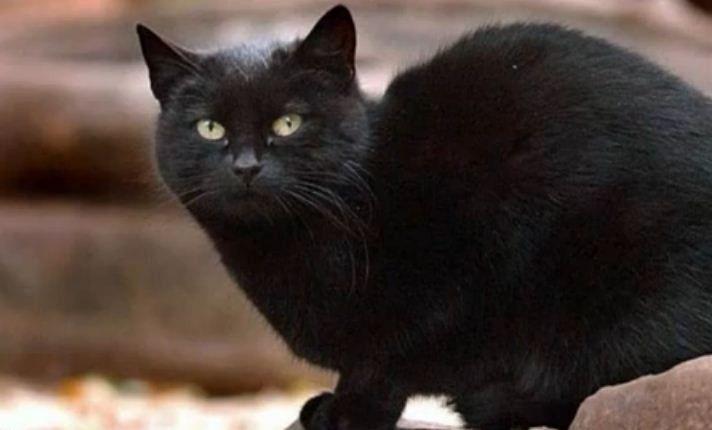 Tommaso rich cat